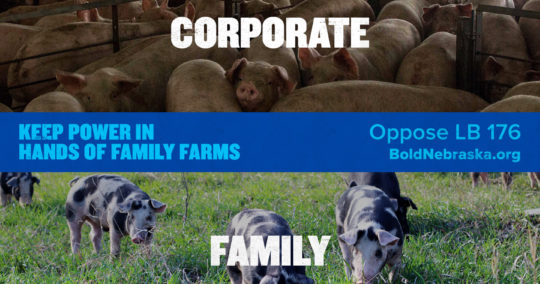 BoldNE_Share-CorporatePigComparison_Graphic